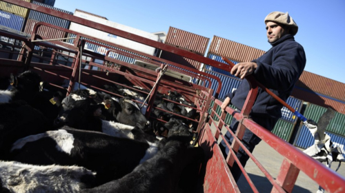 E-commerce boosts Uruguayan beef sales in China