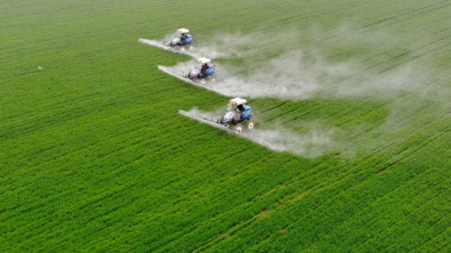 Tractors spray pesticide in the wheat fields in Wanggang Town, Yingshang County of east China's Anhui Province, March 6, 2021. (Xinhua/Huang Bohan)